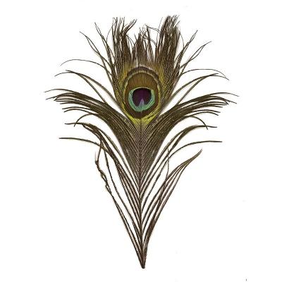 Перо павлина 30-35 см
