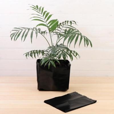 Пакет для рассады, 12 л, 25 × 32 см, толщина 120 мкм, с перфорацией, чёрный