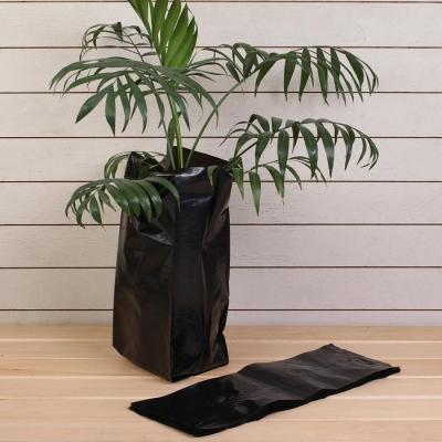 Пакет для рассады, 8 л, 15 × 43 см, с перфорацией, толщина 100 мкм, чёрный